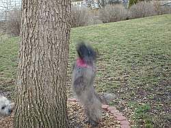 Gotta' get squirrel!