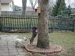 Can dogs climb trees?